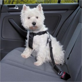 car accessories DOG